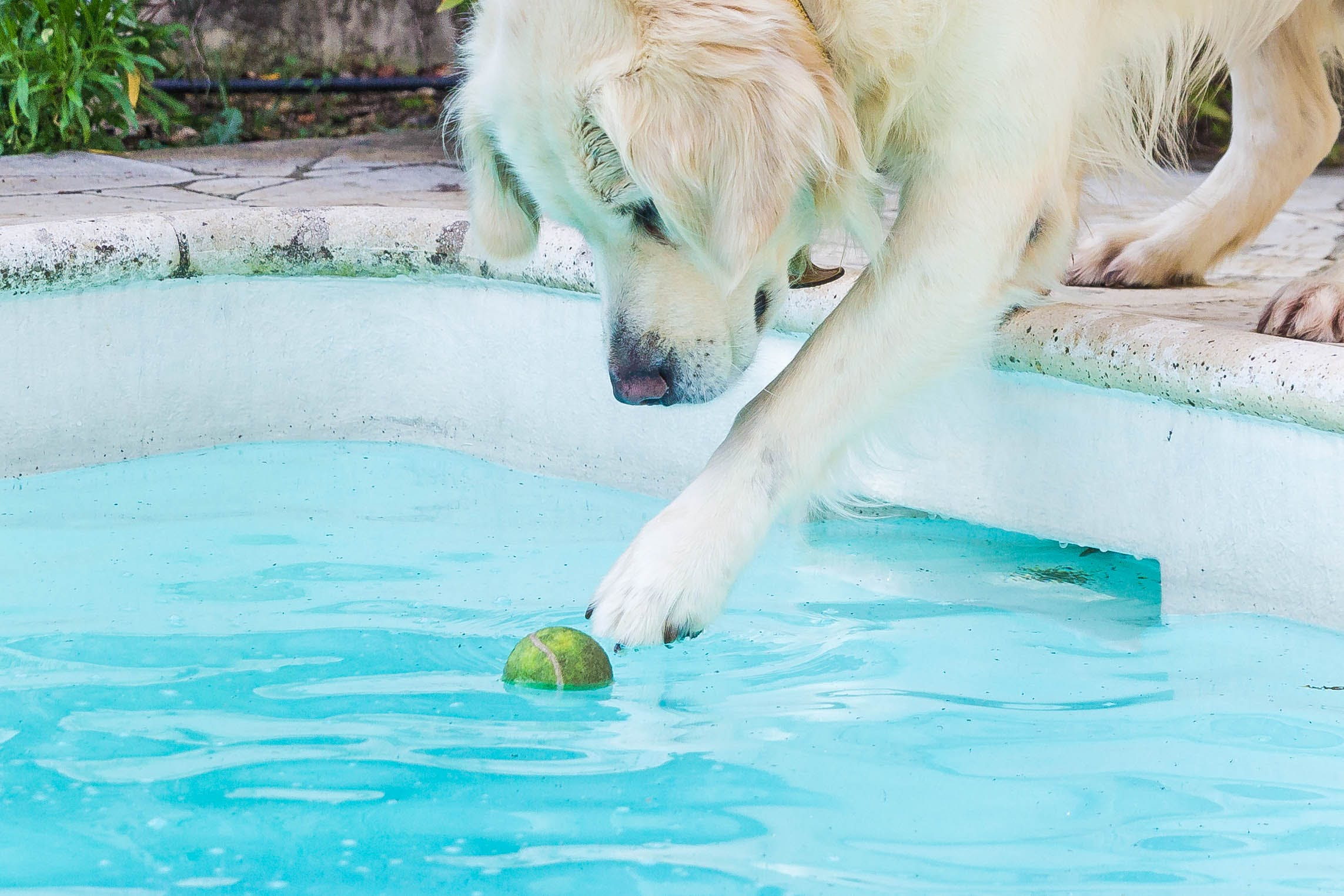 Free stock photo of water, dog, wet, ball