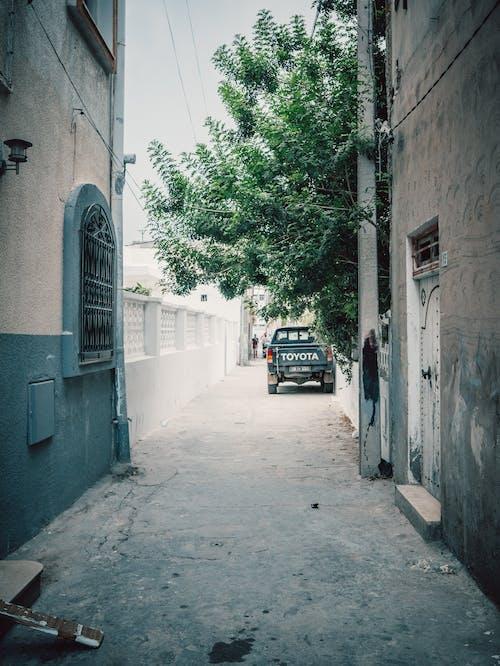 Imagine de stoc gratuită din arbore, automobil, intrare, starea de spirit