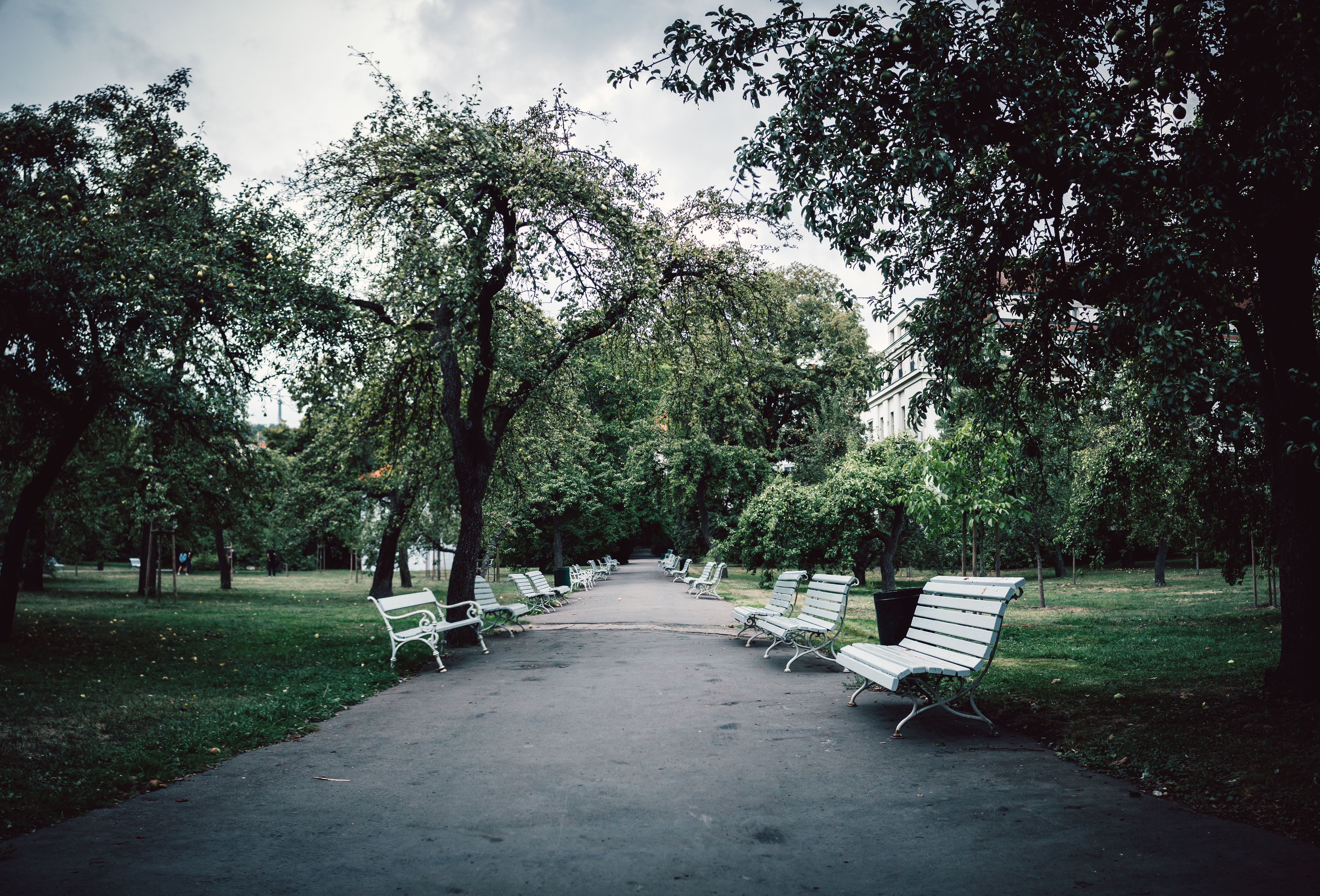 White Wooden Benches On Park