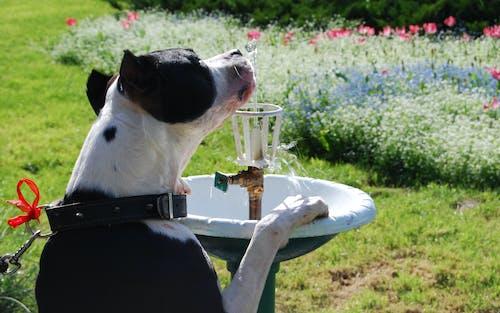 噴泉, 狗在公園裡喝水 的 免費圖庫相片