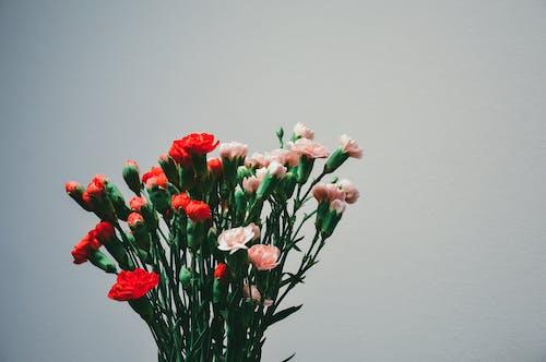 Красные и розовые цветы