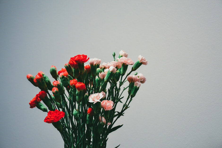 carnations, flowers, plant