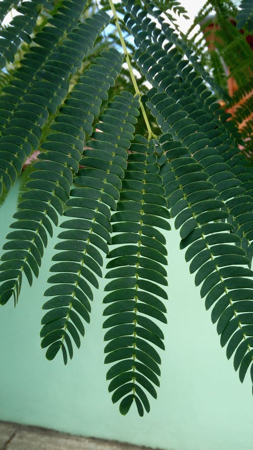 Ilmainen kuvapankkikuva tunnisteilla katukuvaus, lehvät, puun oksat, tummanvihreä