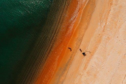 岸邊, 從上面, 日光, 海濱 的 免費圖庫相片