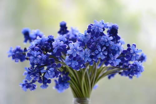 Shallow Focus Photo of Blue Petaled Flowers