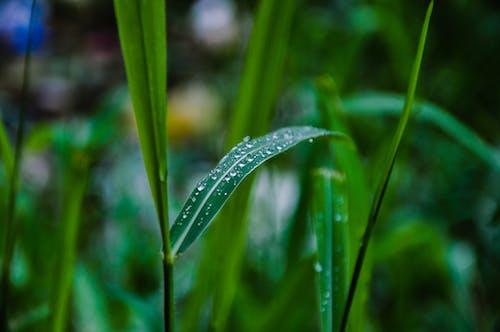 Foto d'estoc gratuïta de després de la pluja, dia plujós, gota d'aigua, gotetes