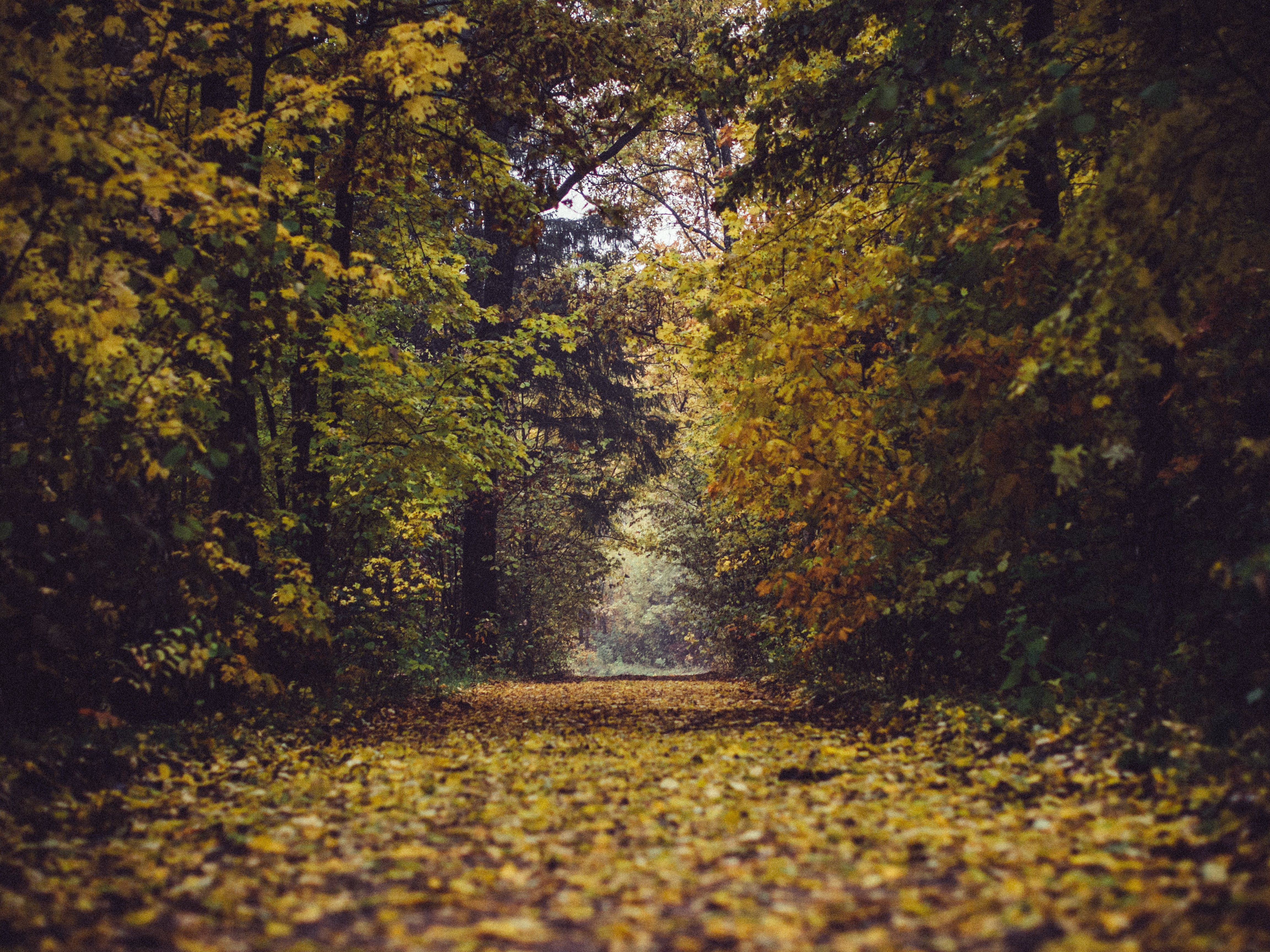 Free stock photo of autumn, fall, forest, leafs