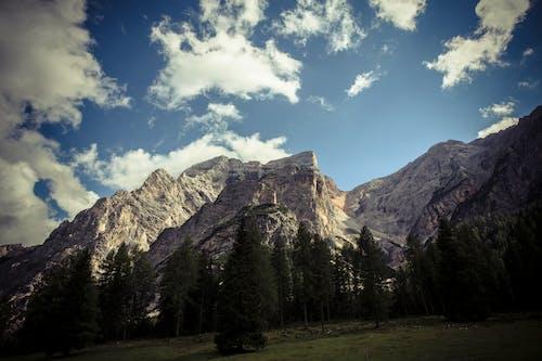 Ilmainen kuvapankkikuva tunnisteilla kivet, kuuset, kuva alakulmasta, laakso