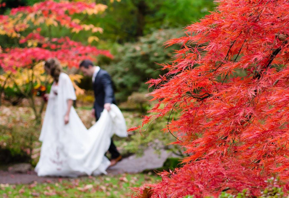Free stock photo of blur, blurred, bride