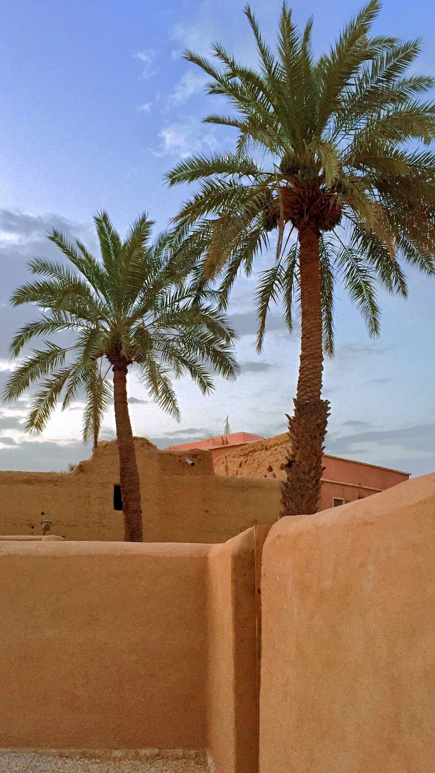Free stock photo of arabian, dates, dusk, house