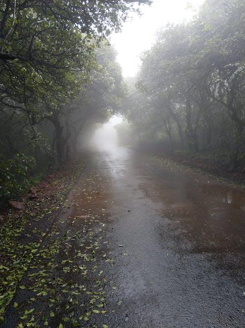 霧が多いの無料の写真素材