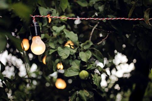 Photos gratuites de ampoules, arbre, branche, câble