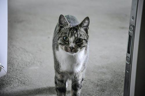 Ảnh lưu trữ miễn phí về con mèo