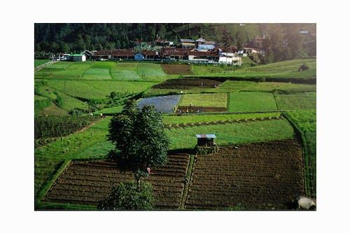 agraria, lans, lanskcape, lawu içeren Ücretsiz stok fotoğraf