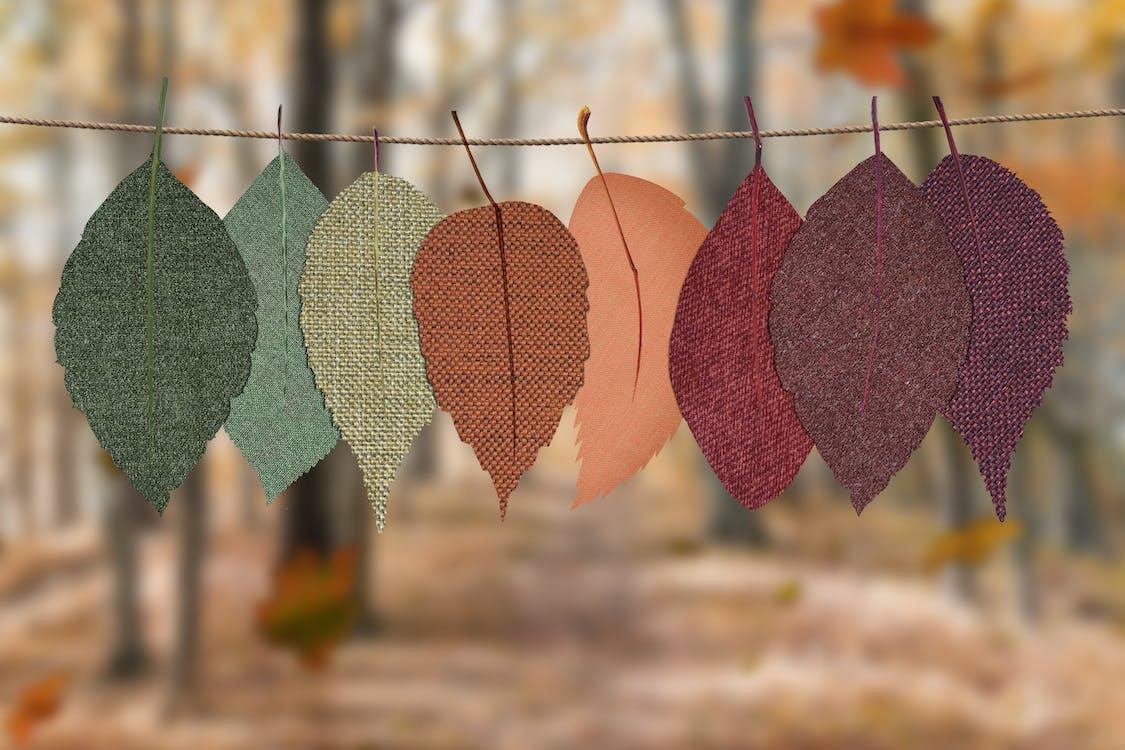 detailný záber, farby, farby jesene