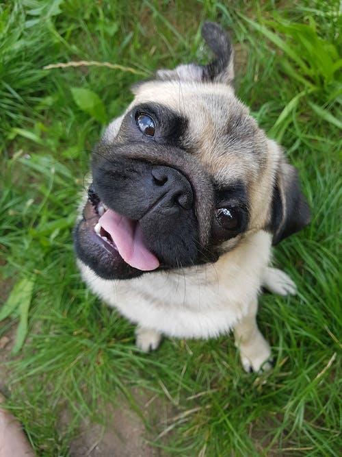 Fotos de stock gratuitas de #perro, trapeadores