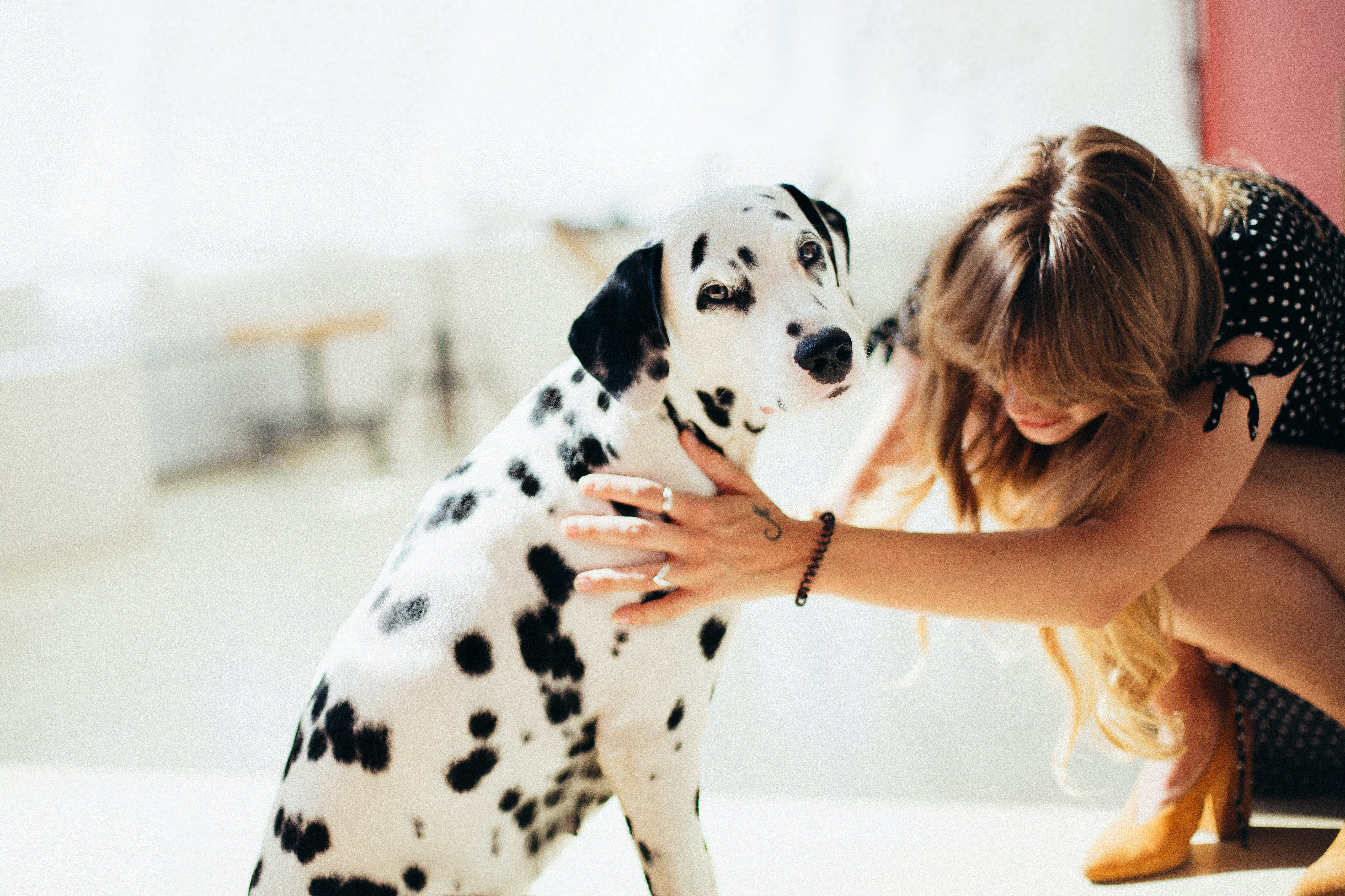 Woman Holding Adult Dalmatian