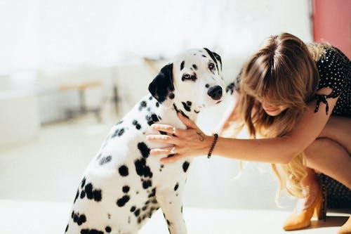 Kostnadsfri bild av däggdjur, dalmatiner, djur, familj