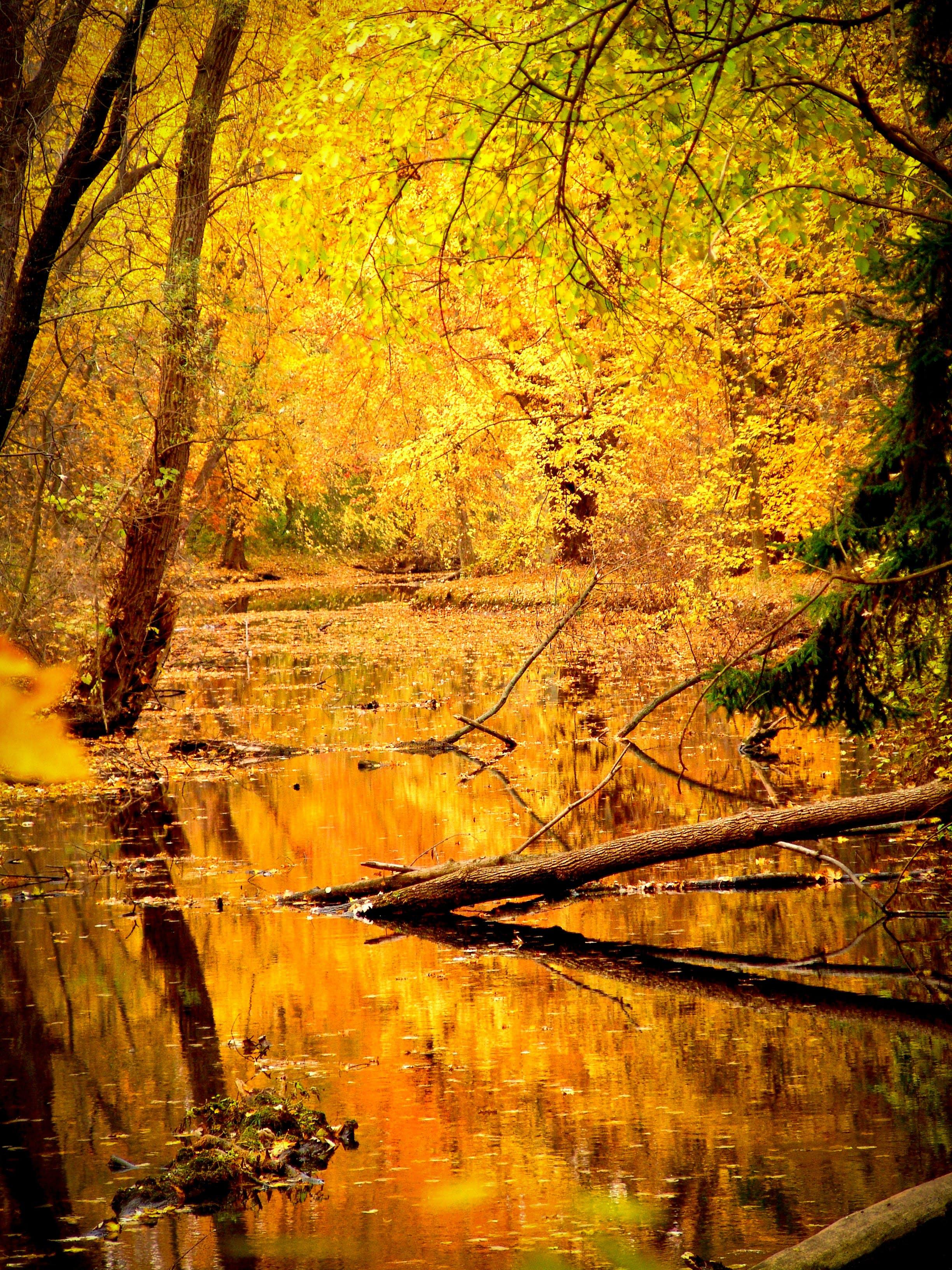 drewno, drzewa, krajobraz