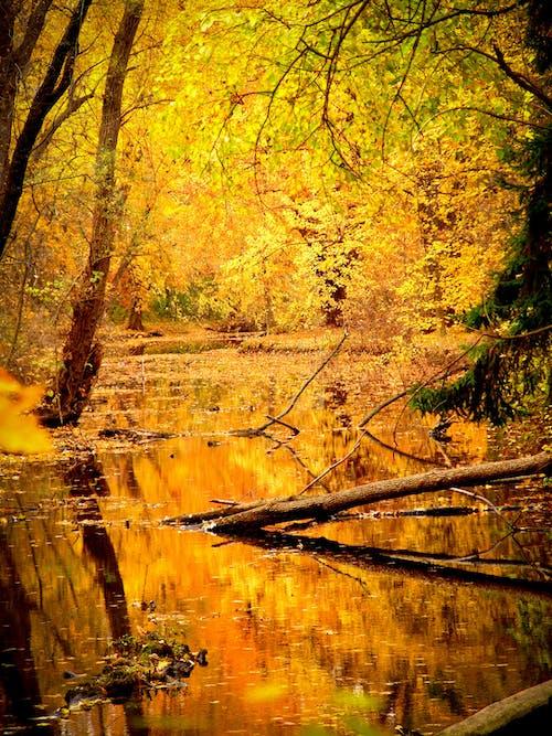 木, 木材, 森林, 水の無料の写真素材