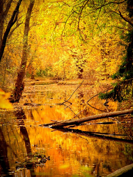 Landscape Photography of Clear Swamp Under Assorted-color Leafed Trees