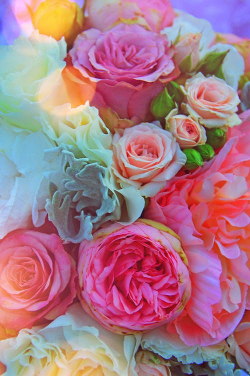 Free stock photo of background, beautiful, bloom