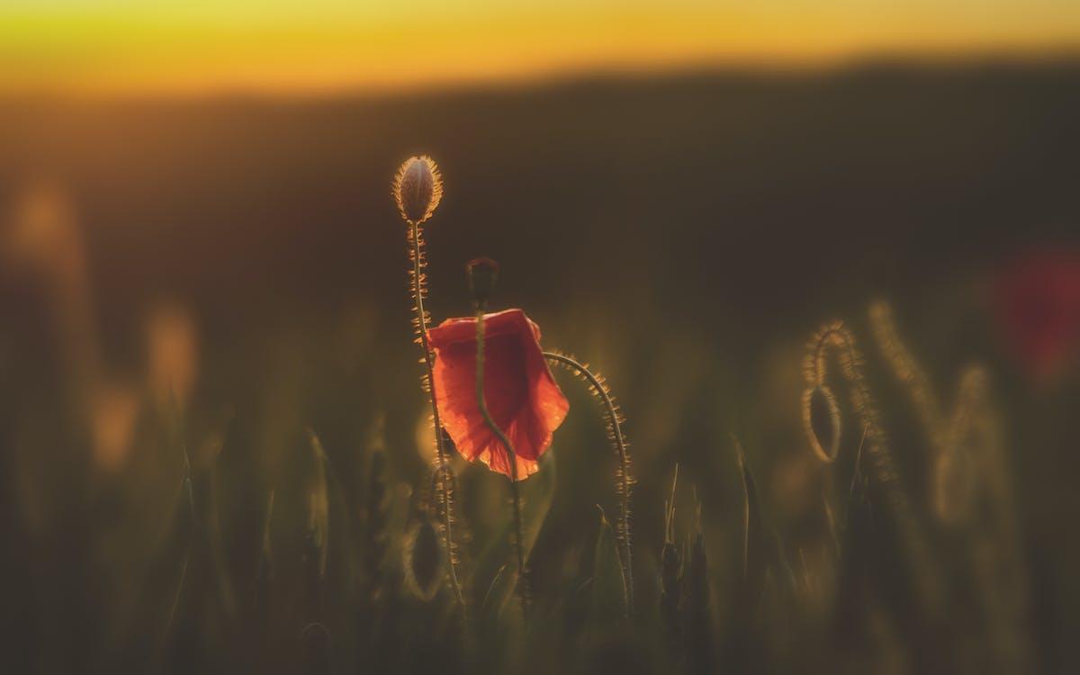 esti nap, gyönyörű virágok, hegyek