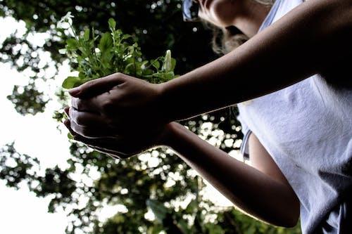 Kostnadsfri bild av dagsljus, flicka, ha på sig, händer