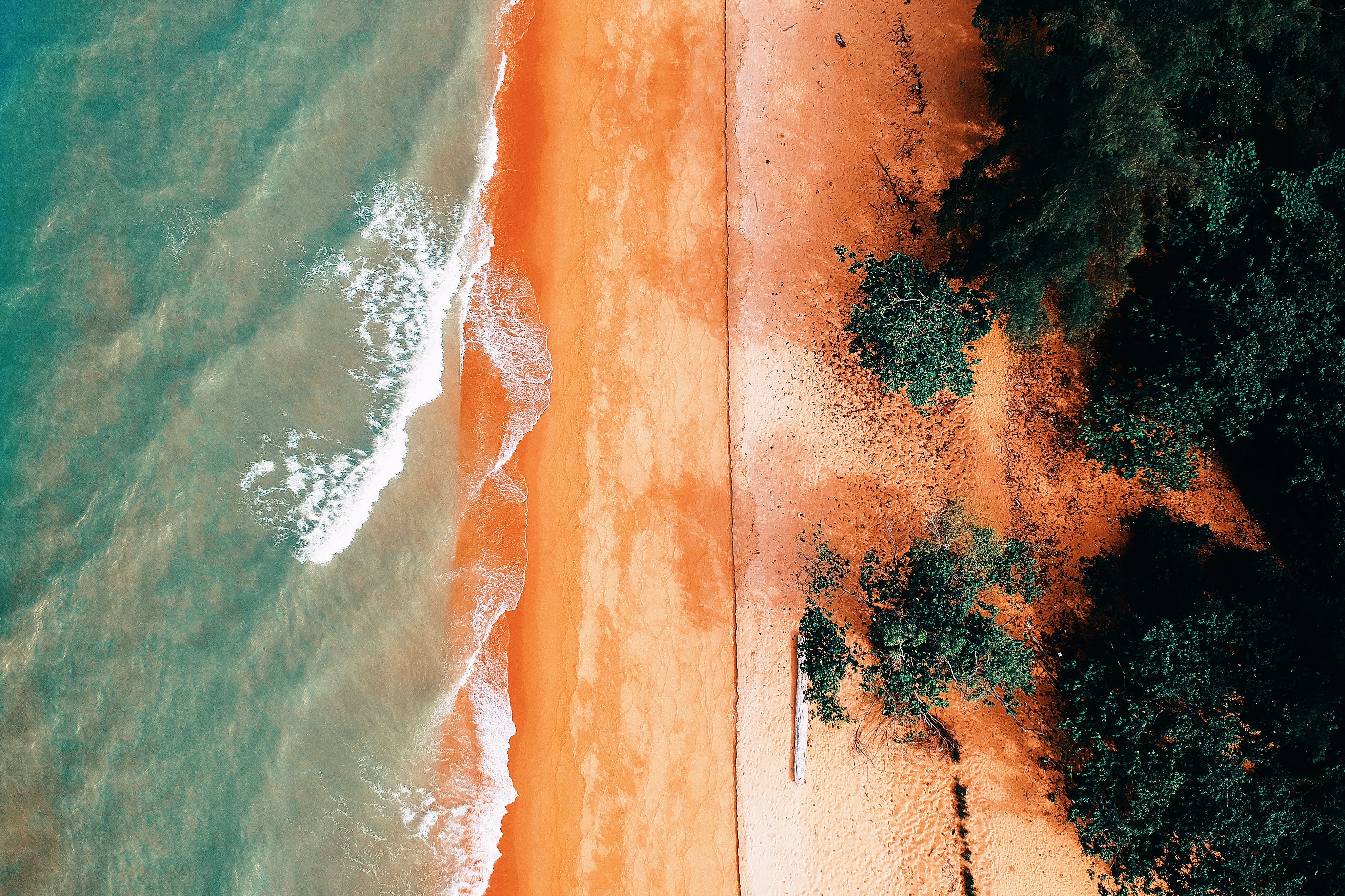 Aerial Photography of Body Ocean Near Trees