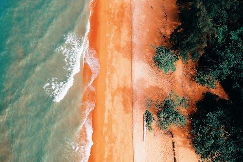 樹木附近的人體海洋航拍