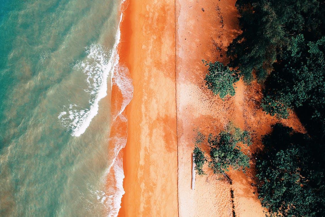 açık hava, ağaçlar, dalgalar