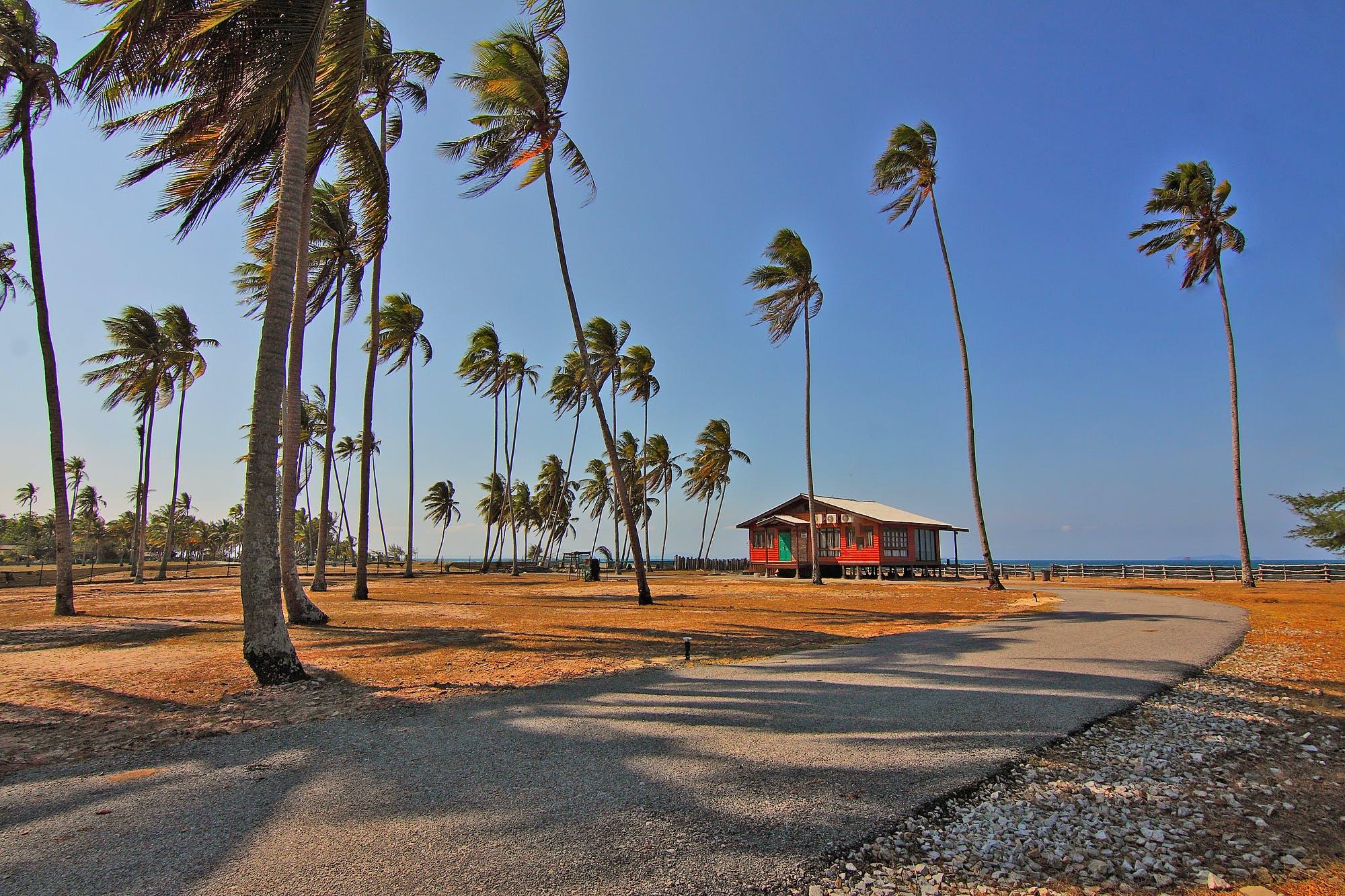 Photos gratuites de arbres, ciel, cocotiers, herbe