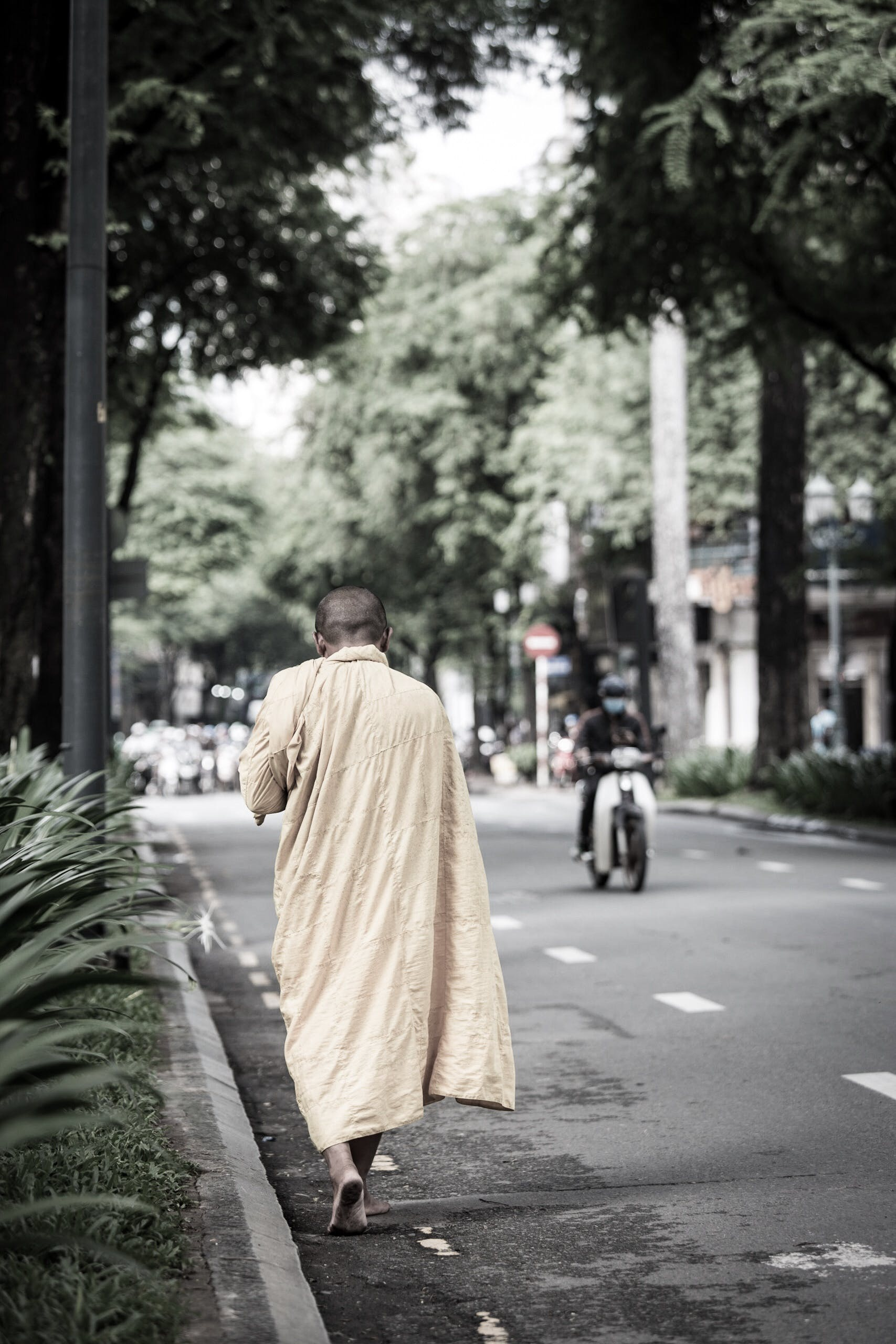 Monk Walking on Road Beside Fern Plants