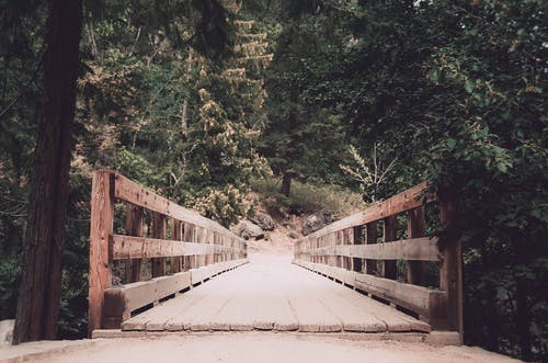 Brown Wooden Bridge With Trees Landscape Photography