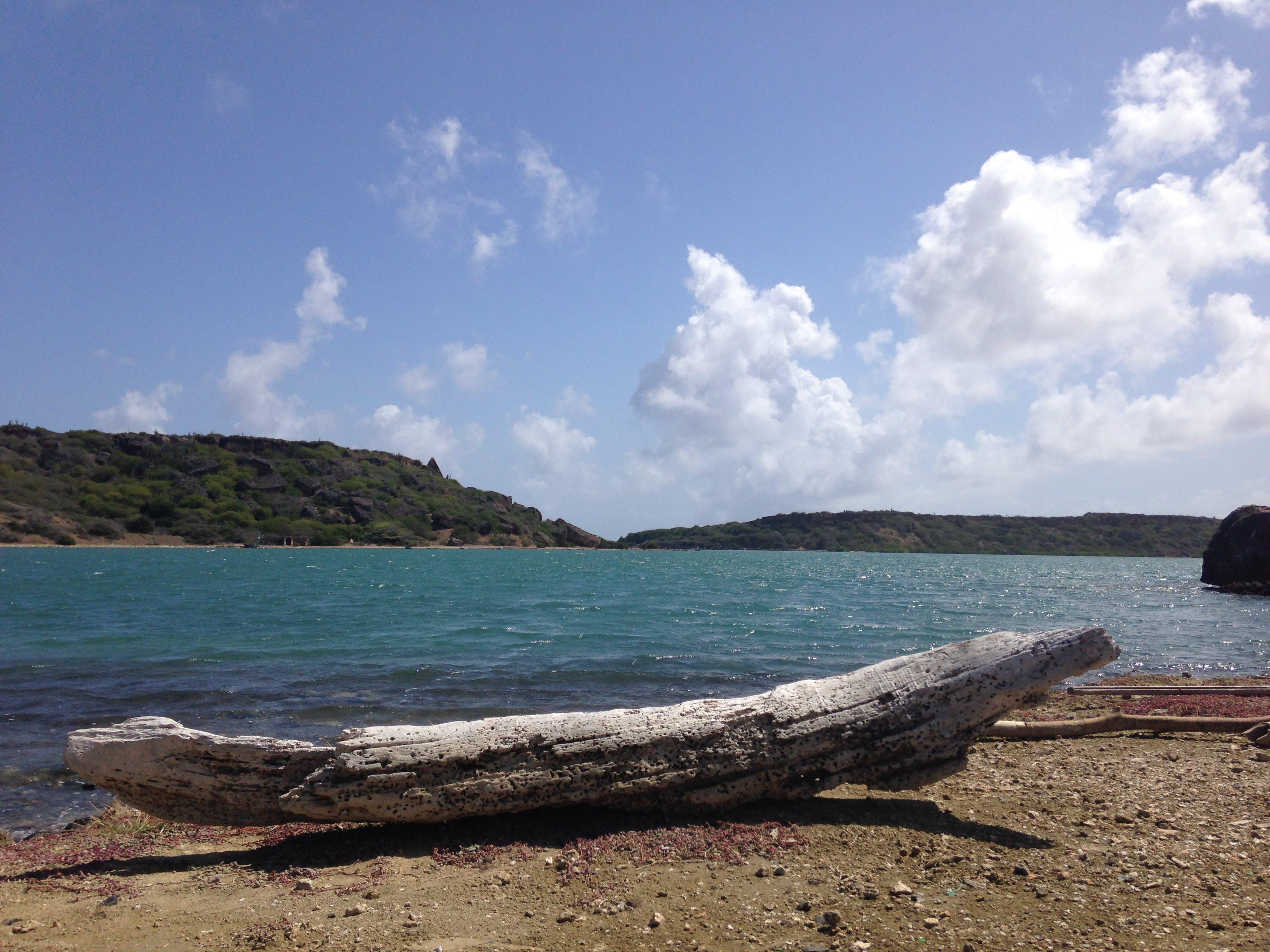 Free stock photo of beach, curacao, drift, sea