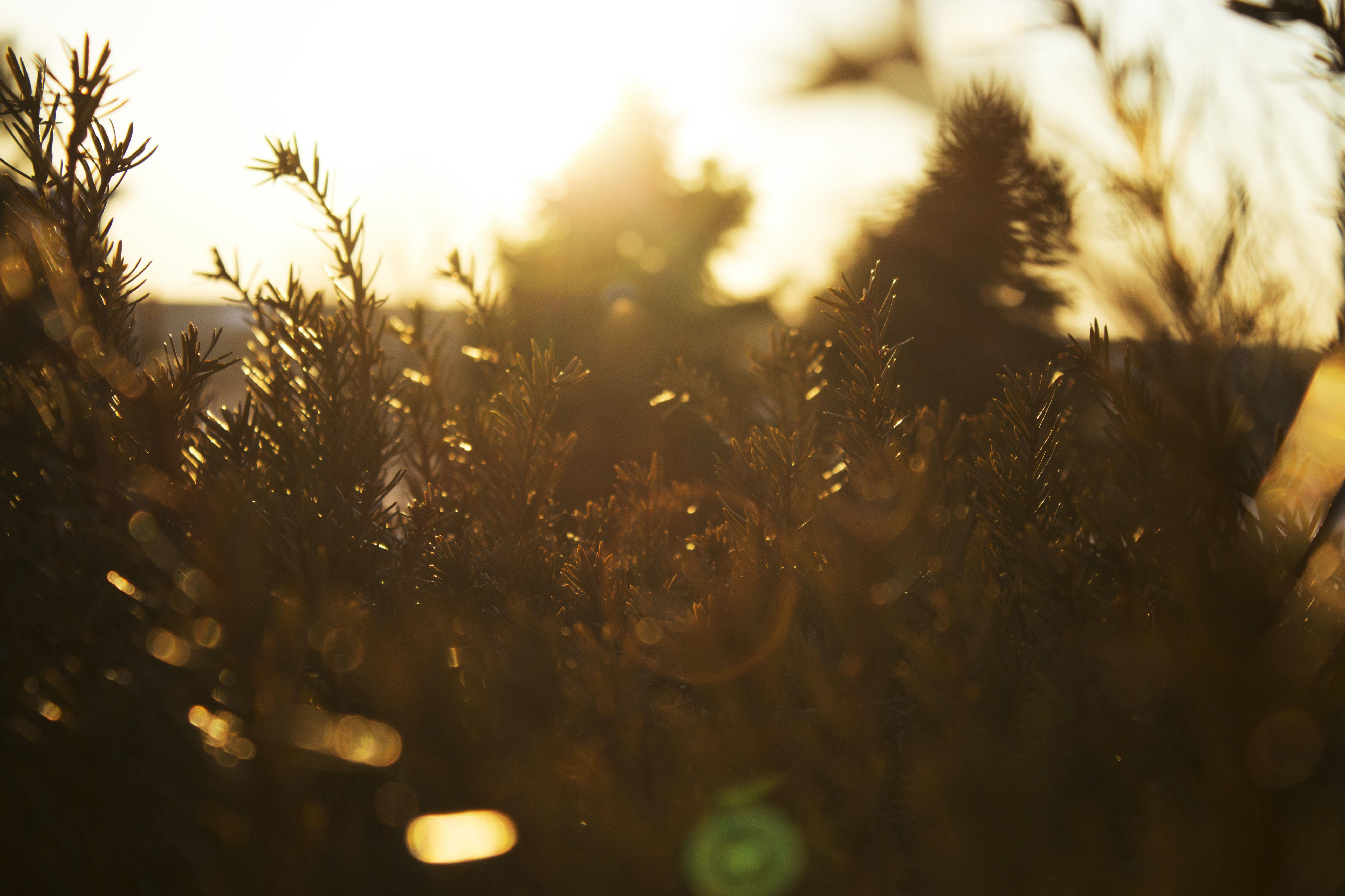 Silhouette of Plants at Sunset