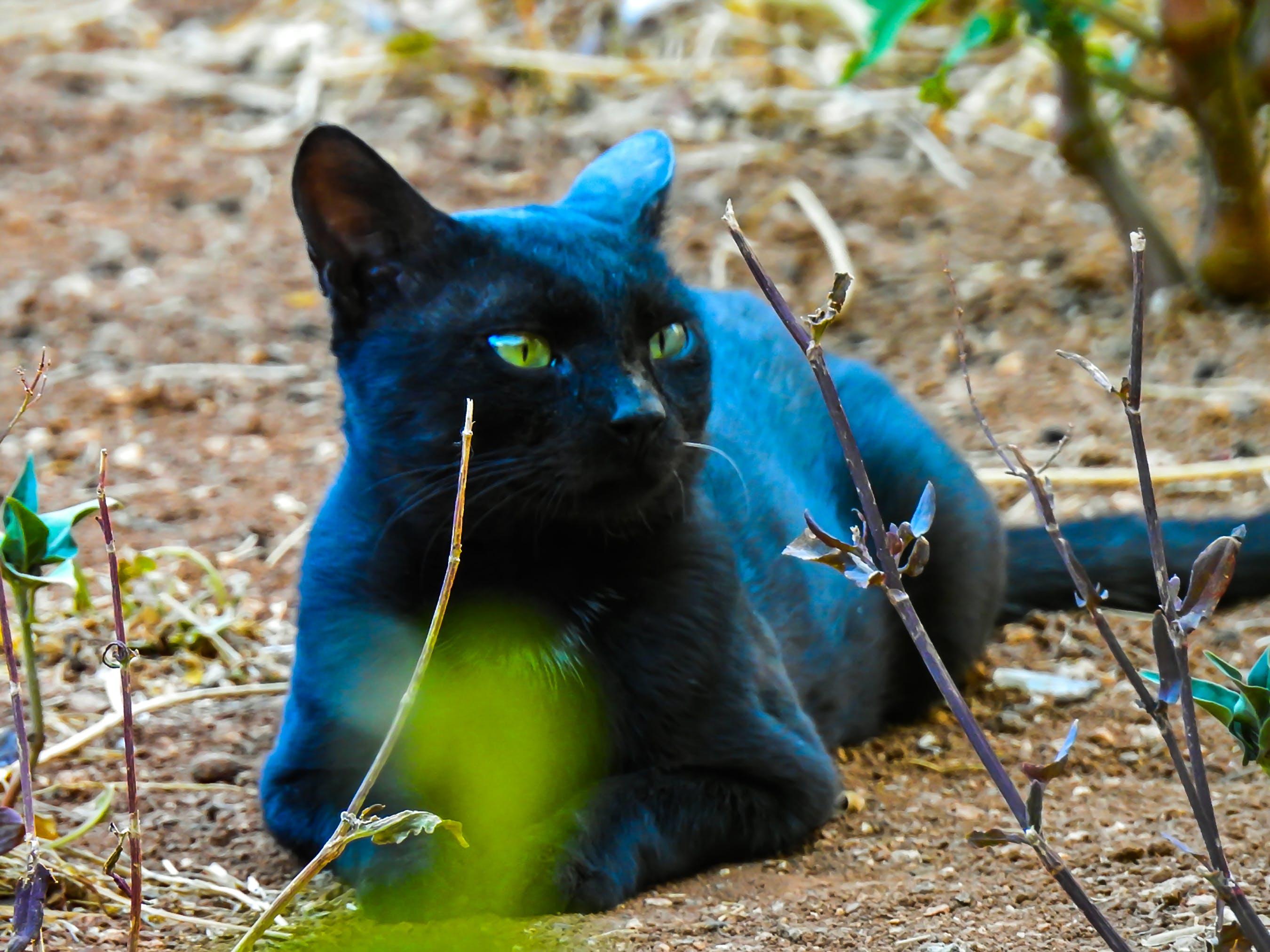 Free stock photo of black, cat, cute