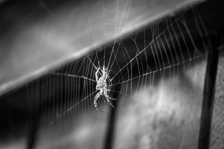 Gratis lagerfoto af edderkop, edderkoppespind, farlig, Island