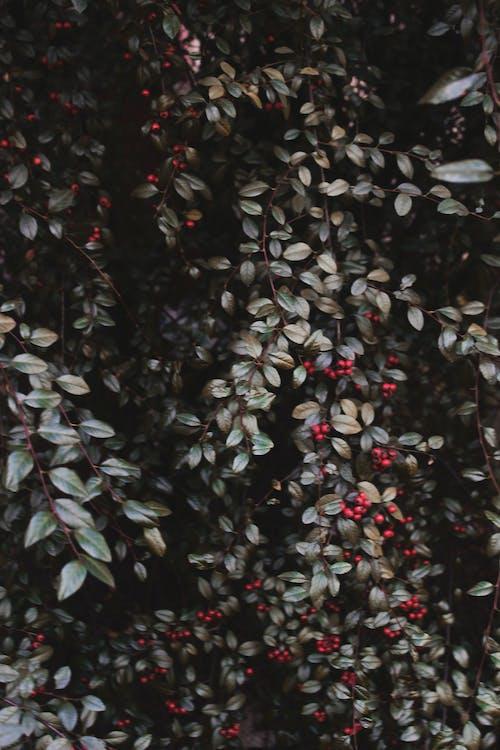 Základová fotografie zdarma na téma temnota