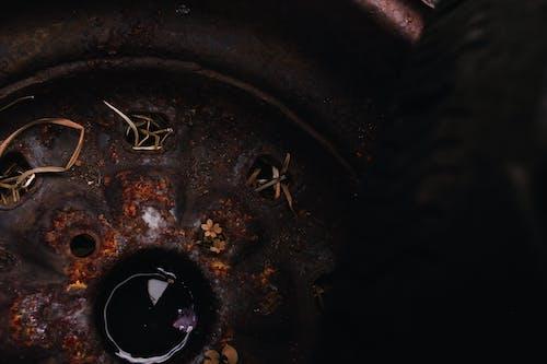 Základová fotografie zdarma na téma rez