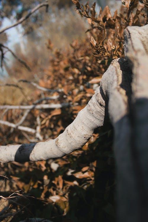 Základová fotografie zdarma na téma matka příroda