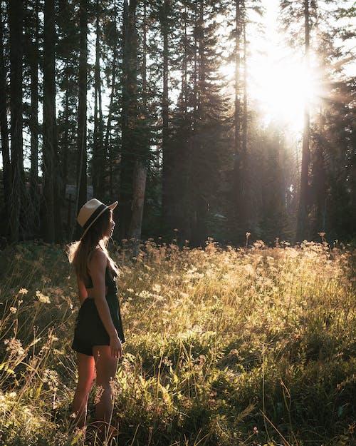 Photos gratuites de arbres, bois, chapeau, cheveux blonds