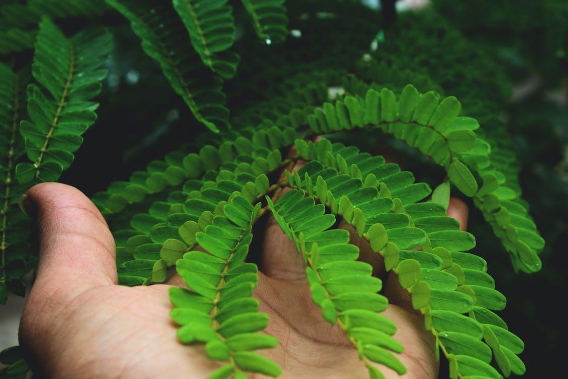 botánico, brillante, colores