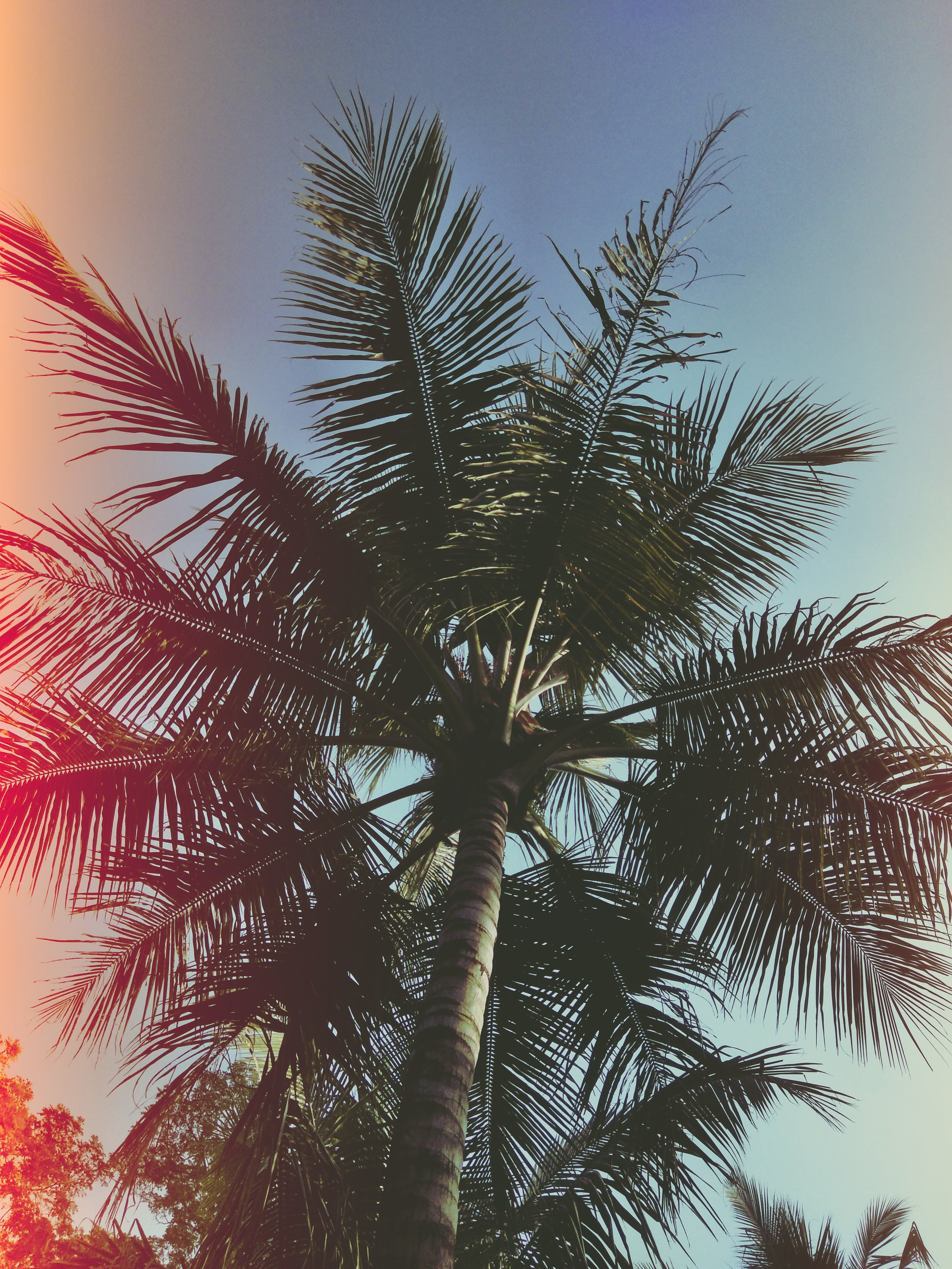 Low Angle Photo of Coconut Tree