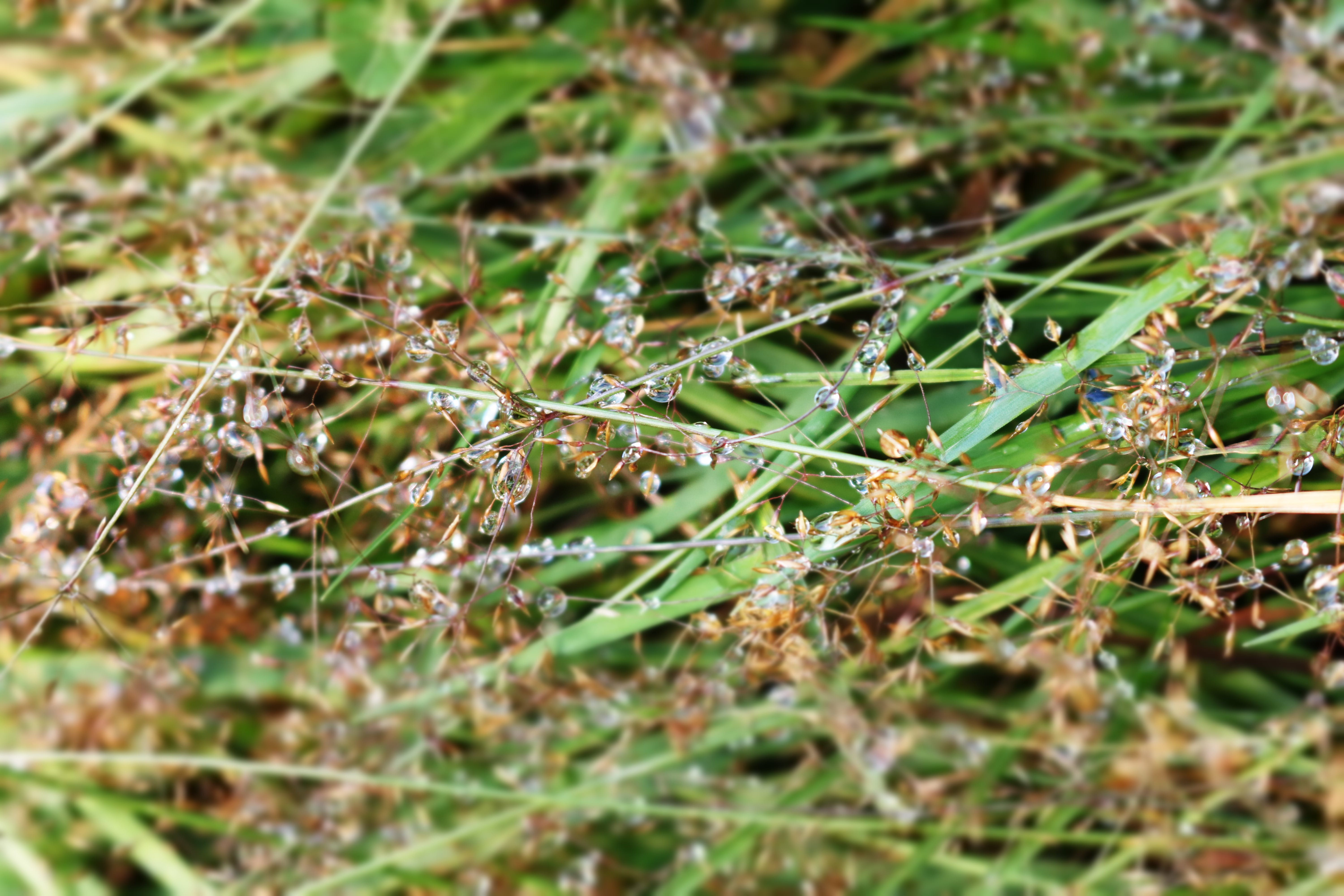 Free stock photo of grass, dew, wet, outdoors