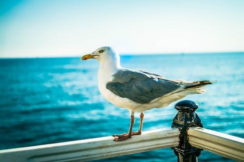 Gratis lagerfoto af blå hav, brighton, hav, måge