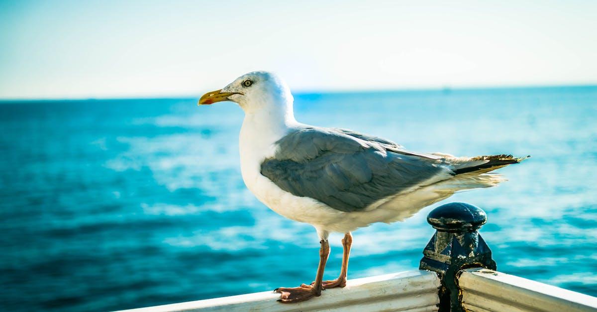 следует охладить човни чайки картинки свидетель