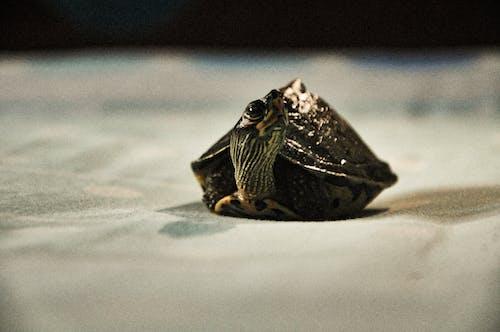 Foto d'estoc gratuïta de animal, animals aquàtics, aquari, natura
