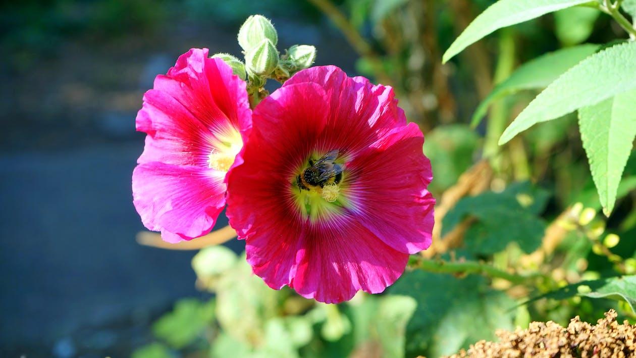 arı, Bahçe, bitki örtüsü