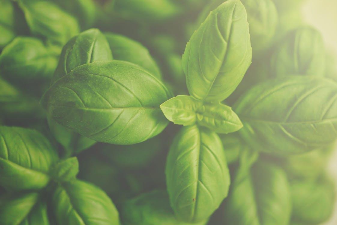 녹색, 성장, 식물